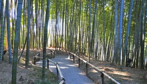 Bamboo grove at Kodaiji temple, Buddhist temple in Kyoto, Japan [14]