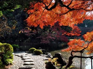 Maple trees at Koishikawa Korakuen Gardens, Koishikawa, Bunkyo , Japan.[15]