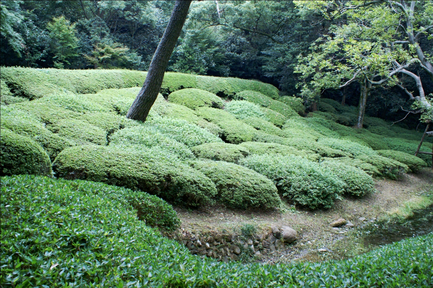 Japanese style of landscape morphogenesis for Japanese garden bushes
